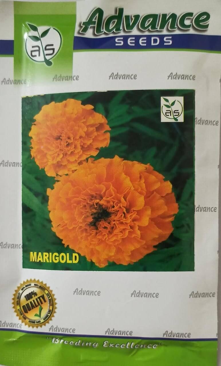 Marigold Advance Seed - 10gm