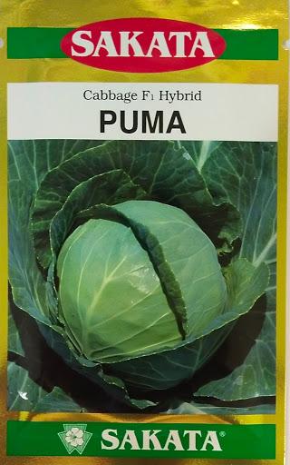 Sakata Cabbage Puma - 10 gm